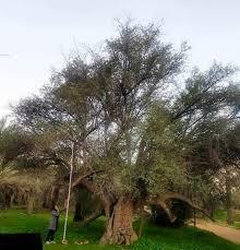 ثبت ملی 5 اثر طبیعی استان بوشهر
