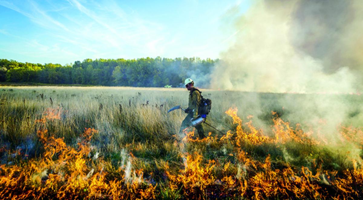 جرقهای کوچک آتش به جان طبیعت میاندازد