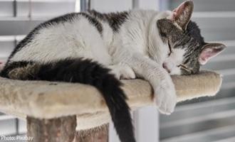 حالتهای مختلف خوابیدن گربه ها، نشانهای از احساسات درونی آنها
