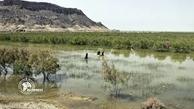 کاهش وابستگی معیشتی مردم به آب در هامون