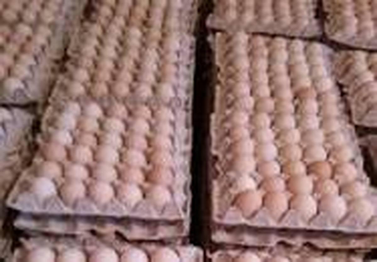 عرضه قیمت هر شانه تخم مرغ 20 هزار تومان در فروشگاه ها