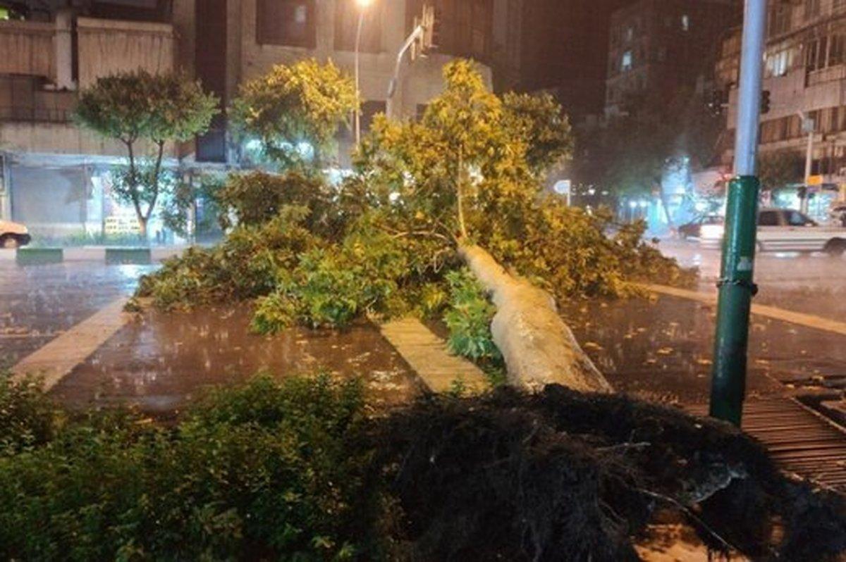 سقوط درخت در خیابان کارگر شمالی تهران براثر توفان شدید