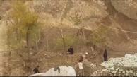 قطع درختان حیاط بیمارستان مسیح دانشوری برای عملیات عمرانی