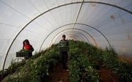 صادرات عسل، شراب و زیتون شهرکهای اسرائیل به امارات   فلسطین: محکوم است