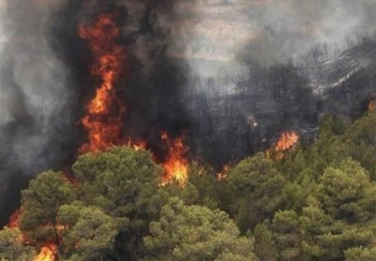 آتش ۲۰ هکتار از جنگلهای نوشهر را سوزاند