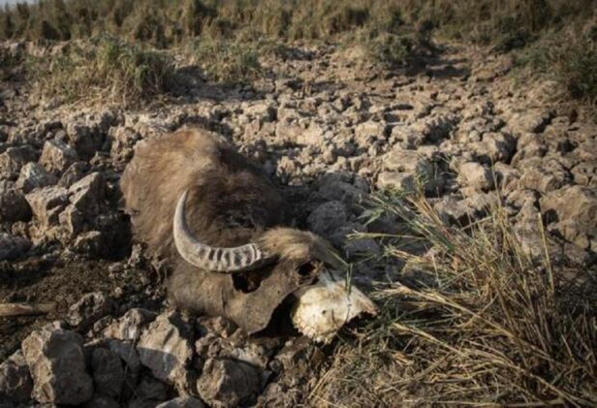 واکنش سازمان محیط زیست به خشک شدن تالاب هورالعظیم: طبیعی است