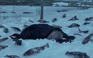 سریال قورباغه از فیلم مگنولیا کپی برداری کرد+عکس| کپی برداری سریال قورباغه در روز روشن!