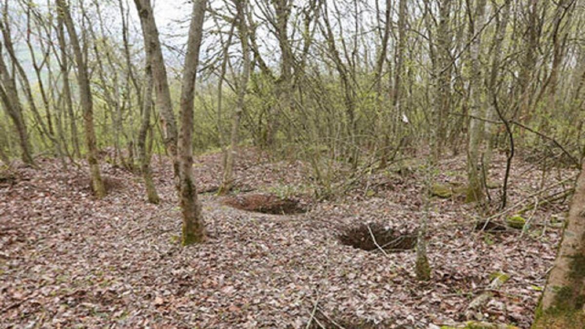 کاسبی قاچاقچیان جنگل با خاک  |  این بار فرغونها مأموریت حمل خاک را بر عهده گرفتند