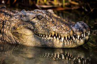 تمساح های جدید اقتصادی در کمین