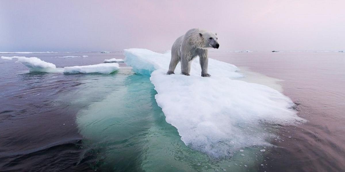 اگر همه یخچال های طبیعی زمین یک شبه آب شوند چه اتفاقی می افتد؟