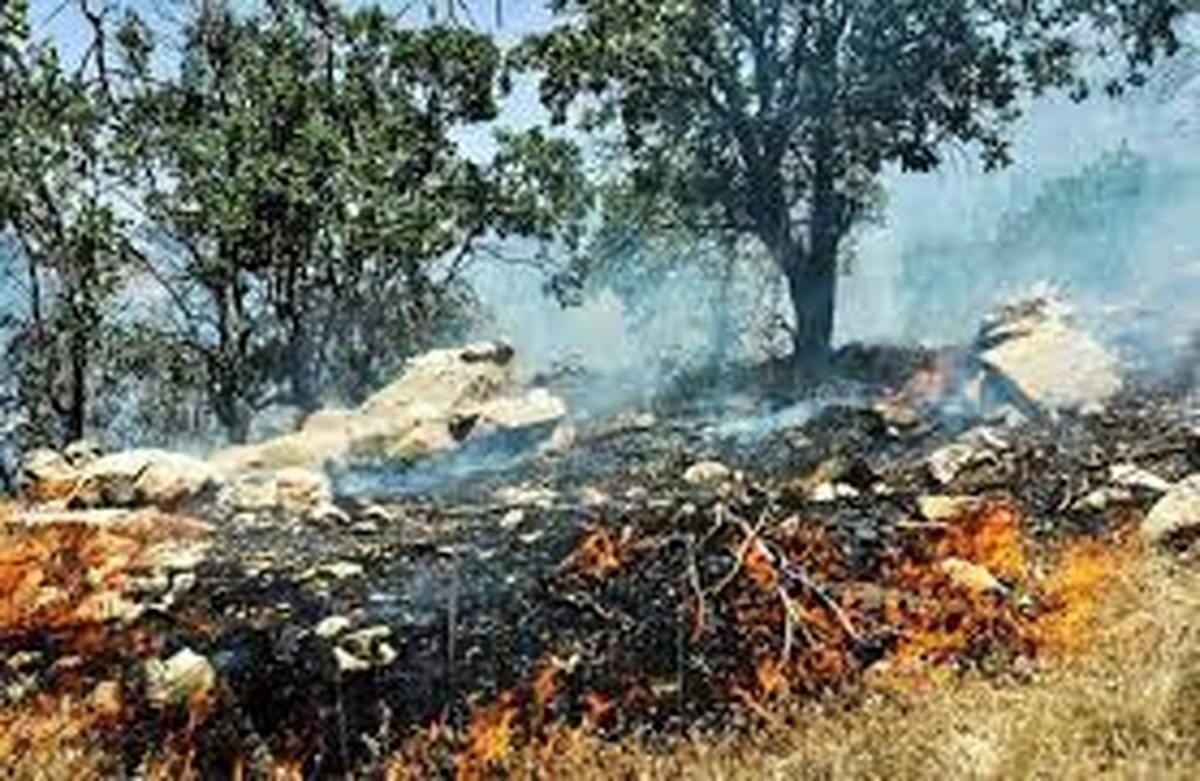 جنگلهای مریوان در آتش میسوزند