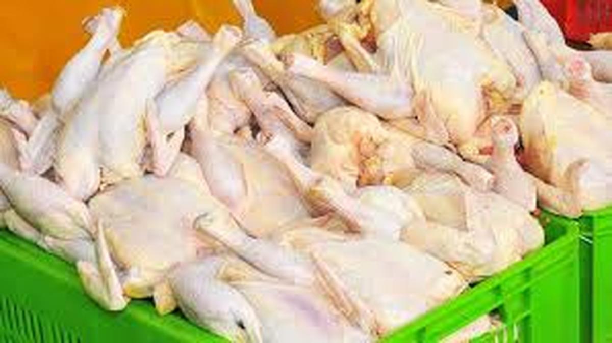قیمت مرغ  | نرخ مصوب قیمت مرغ در بازاربه ثبات رسید