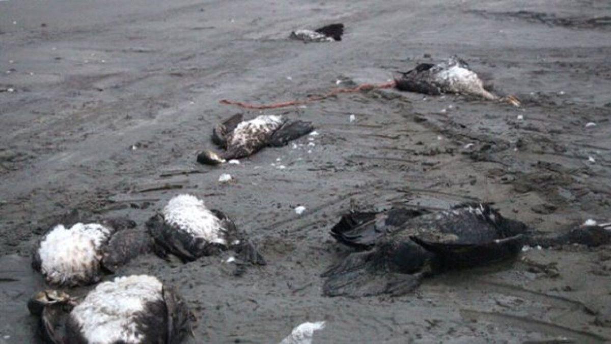 بیماری | تلفات ناشی از آنفلوآنزای پرندگان در پرندگان مهاجر مشاهده شد