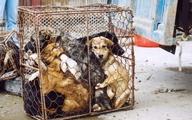 دولت چین برای خرید و فروش و مصرف گوشت حیوانات وحشی ممنوعیت موقت اعلام کرد.