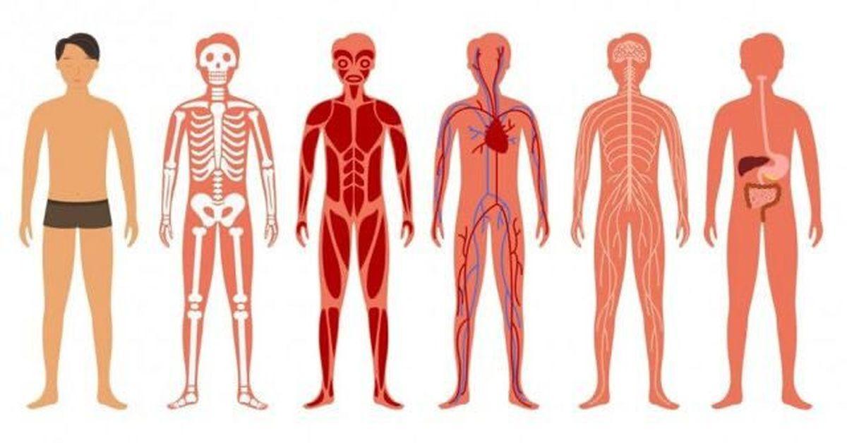 """گوگل برای بدن انسان """"گوگل مپس"""" میسازد!"""