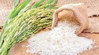 توزیع برنج به قیمت کمتر از 20هزارتومان دربازار