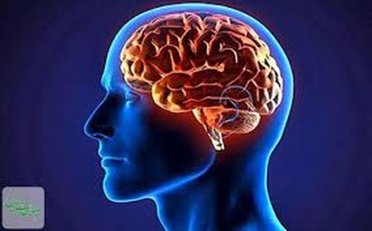 به مغز خوداعتماد نکنید چون همیشه درست فکرنمیکند