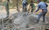 مرگ درختان برای تولید زغال