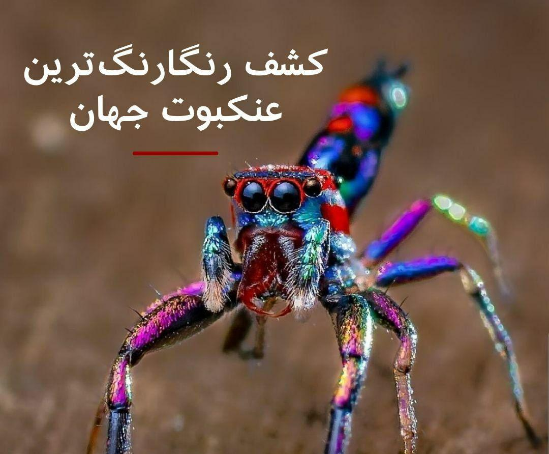 پیداشدن گونه نادر عنکبوتی  در کرالا