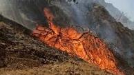 آتش سوزی عمدی جنگل ها   پنج درصد آتشسوزیهای اراضی ملی عمدی است