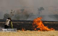 آتش سوزی در 200 هکتار از گندمزارهای ایذه
