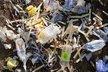 تاکید سازمان محیط زیست بر جمعآوری و امحای صحیح پسماندهای «کرونا»
