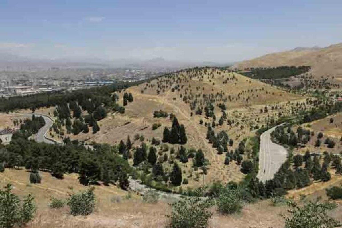 درباره جنگلهای استان تهران چه میدانیم؟