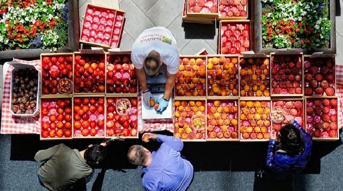 رکب محتکران و دلالان میوه| فساد 250 هزار تن میوه محتکران و دلالان میوه