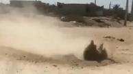اتفاقی عجیب در خاک بوشهر    خاک بوشهر در حال جوشیدن  +فیلم