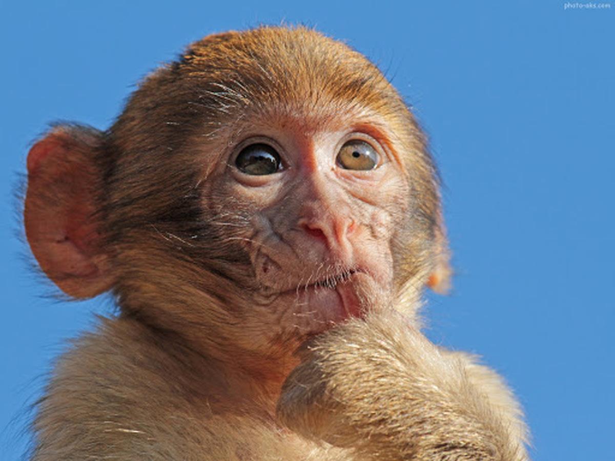 ویرایش ژن باعث کاهش کلسترول در خون میمونها شد