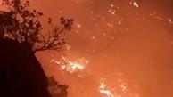 آتش یک به یک درختان را کنار زده و به خاکستر تبدیل میکند.