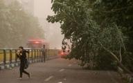 هشدار هواشناسی نسبت به وزش باد شدید تا ۱۱۰ کیلومتر سرعت