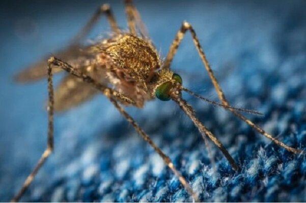 ویروس «ای ای ای» بیماری مرگبار درآمریکا