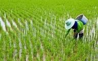جهانگیری: واردات برنج برای ایجاد آرامش در بازار و اطمینان خاطر مردم است