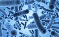 معرفی میکروارگانیسمهایی برای کنترل آفات در کشور