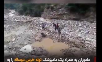 ویدیو: کشتن بیرحمانه توله خرس ۲ساله در سوادکوه