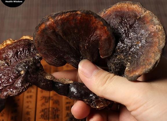 خواص شگفت انگیز قارچ گانودرما لوسیدوم در درمان بیماریها و تقویت سیستم ایمنی بدن