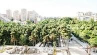 قطع درختان | قطع درختان در  باغ بهشت تهران