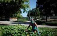 """""""کوبا"""" از شهروندان خود خواست غذای خود را تولید کنند + عکس"""