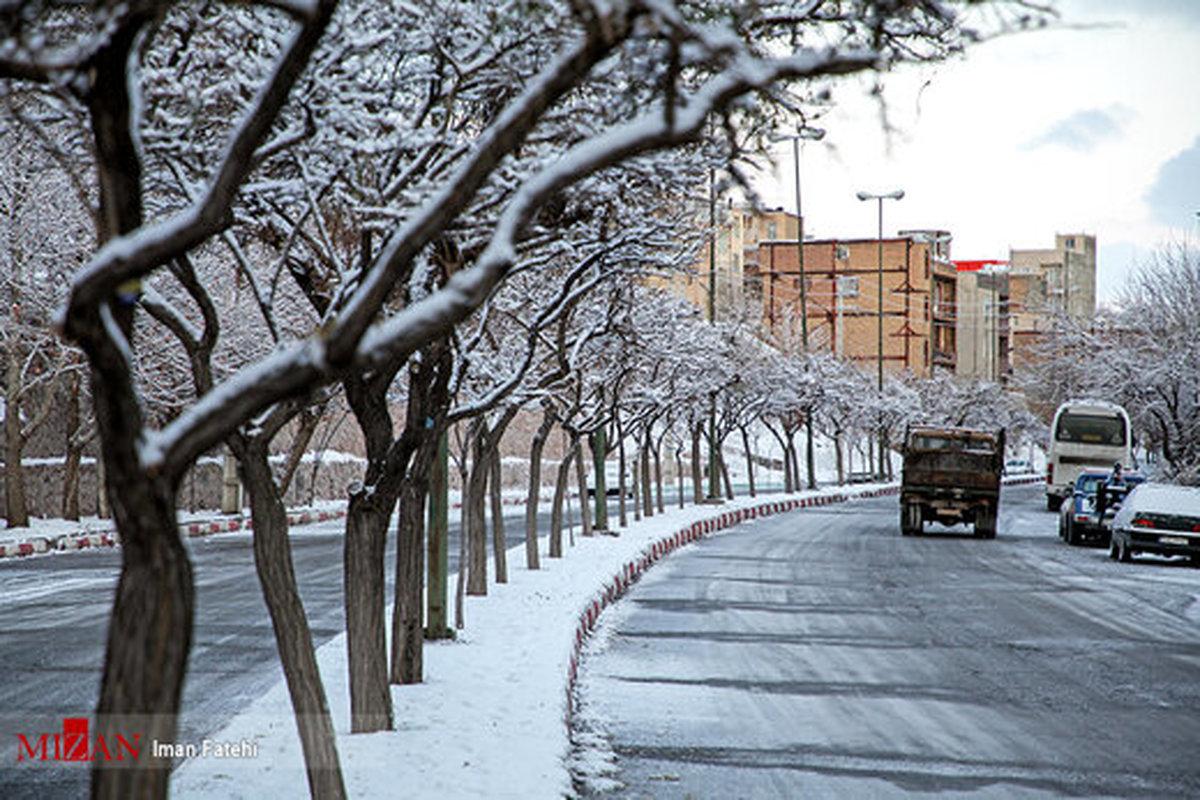 درختان یخ زده در خواب زمستانی