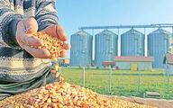 نهاده دامی در دام سیاستی | علل وابستگی به واردات خوراک طیور چیست؟