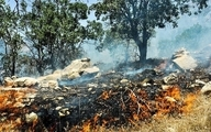 منابع طبیعی: آتش سوزی در بیش از ۲۰۰ هکتار از جنگلهای مریوان