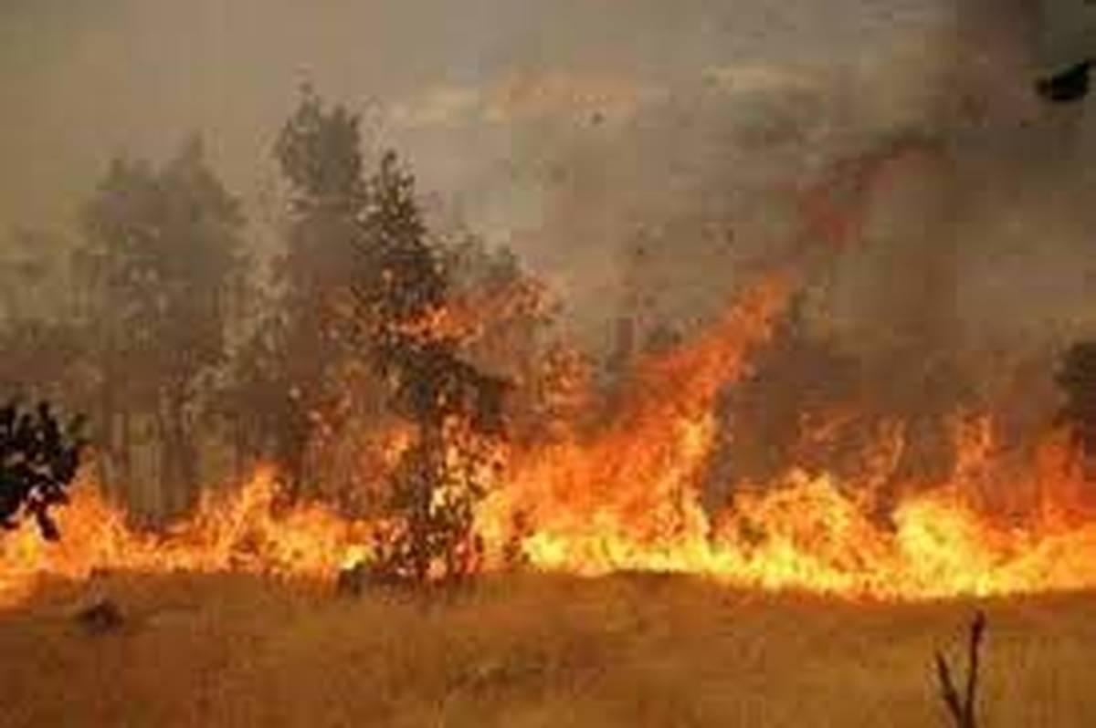 آتش سوزی جنگلهای «نارک» گچساران همچنان ادامه دارد