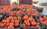 چرا عراق ۲۰۰ کامیون گوجه ایران را برگشت داد؟