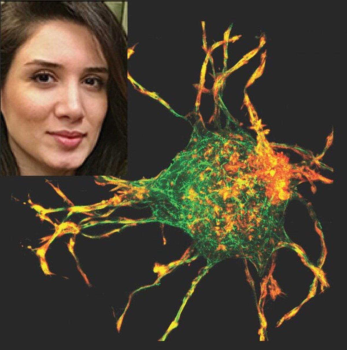 کشف رازهای ترمیم زخم توسط دانشمند ایرانی
