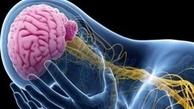 مهمترین تمایز در عملکرد  مغز زن و مرد