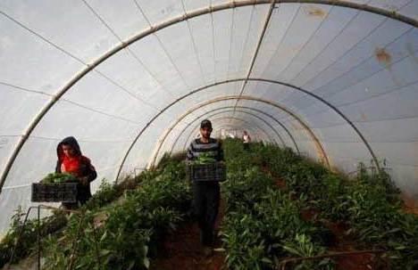 صادرات شراب، روغن زیتون و عسل از اسرائیل به امارات| فلسطینی ها چنین صادراتی را محکوم کردند