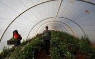 صادرات شراب، روغن زیتون و عسل از اسرائیل به امارات  فلسطینی ها چنین صادراتی را محکوم کردند