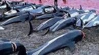 """کشتار صدها دلفین در جزایر """"فارو"""" در دانمارک +عکس"""