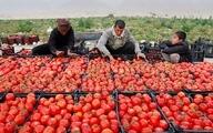 رییس اتحادیه بارفروشان: گرانی رب ربطی به گرانی گوجه ندارد